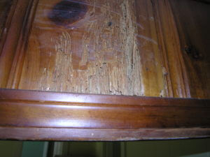 rent house appreciation - before - termite damage
